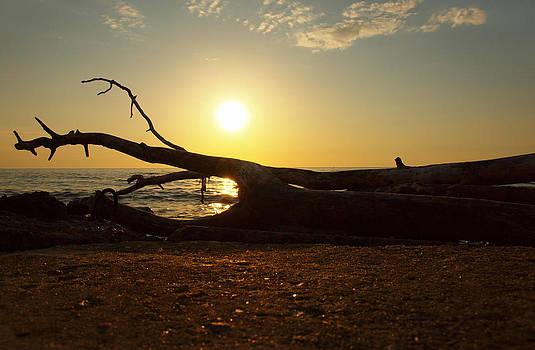 Gynt   - Sea / beach / tree / sunset