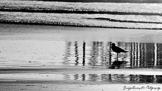 Sea Bird by Emily Fidler