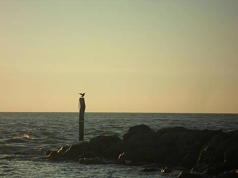 Sea Bird Landing by Val Oconnor
