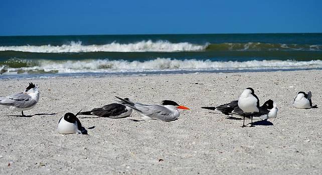 Sea Bird Sanctuary by Tara Miller