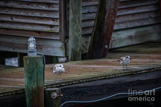 Dale Powell - Sea Birds Dockside