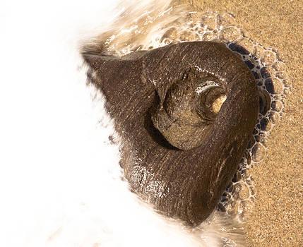 John Daly - Sea Foam Heart