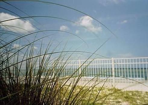 Sea Grass by Debbie Wassmann