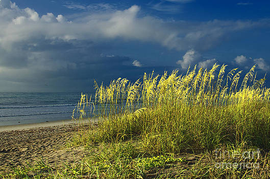 Sea Grass by Jerry Hart