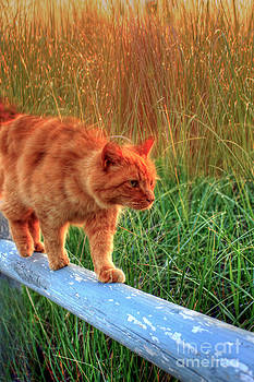 Brenda Giasson - Sea Grass Tabby Cat