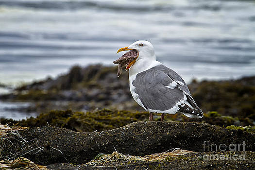 Sea Gull and starfish by Carrie Cranwill