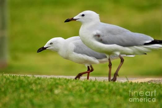 Sea gull  by Bobby Mandal