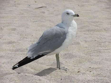 Sea gull  by Daisy Morales