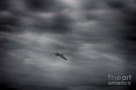 Sea Gull by Jeremy Linot