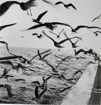Sea Gulls by Vennie Deas Moore