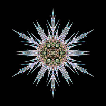 Sea Holly I Flower Mandala by David J Bookbinder