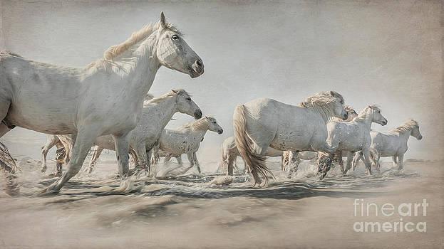 Sea Horses by Heather Swan