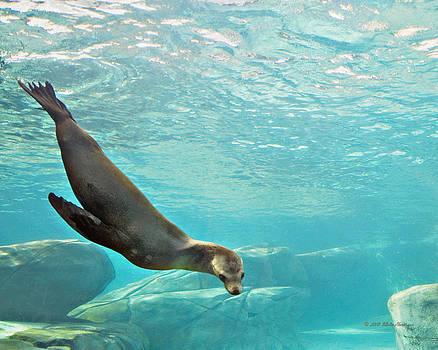 Walter Herrit - Sea Lion 1a