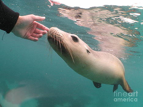 Sea Lion Cuddles by Crystal Beckmann