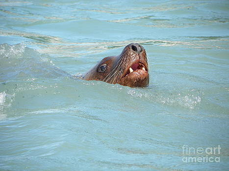 Sea Lion by Jennifer Kimberly