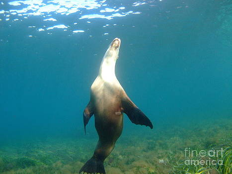Sea Lion Pose by Crystal Beckmann