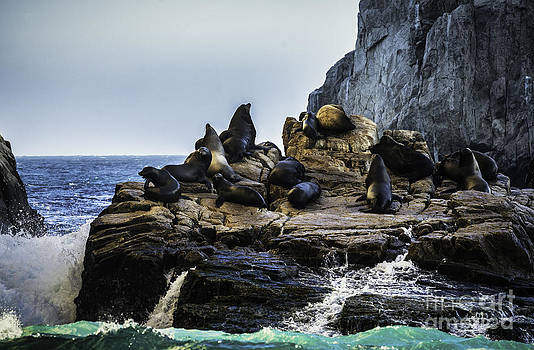Sea Lion Rock by Richard Mason