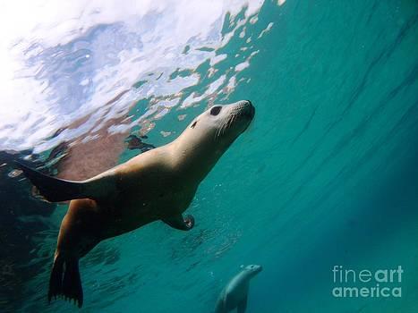Sea lion under lights by Crystal Beckmann
