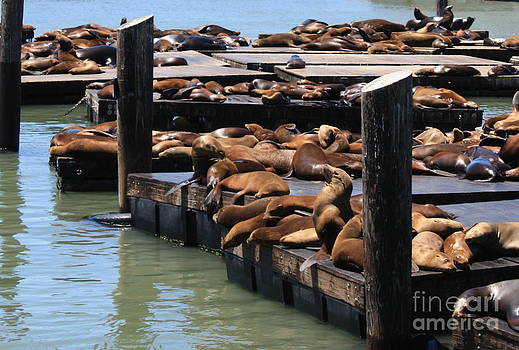 Danielle Groenen - Sea Lions on Pier 39