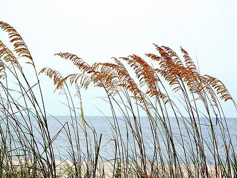 Sea Oats and Serenity by Cindy Croal