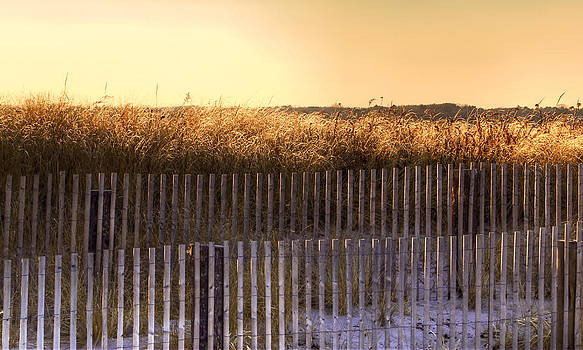 Golden Hour Sea Oats by Richard Hinds