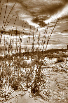 Sea oats by Jim Wright