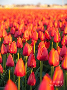 Sea of Flowers by David Hanlon