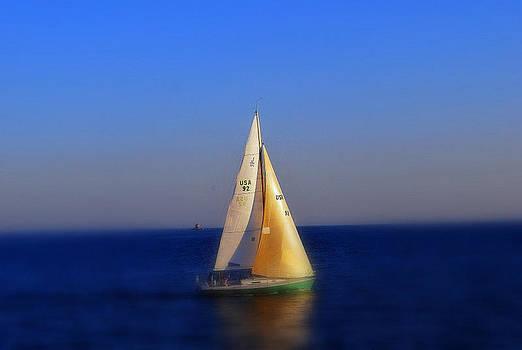 Sea of life by Gloria Warren