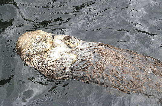 Sea Otter by Brian Chase