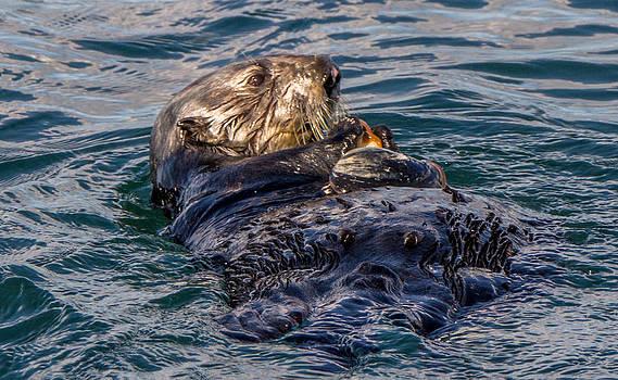 Randy Straka - Sea Otter with Clam