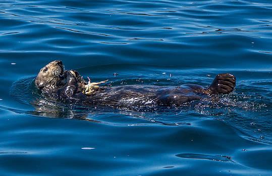 Randy Straka - Sea Otter with Crab Monterey