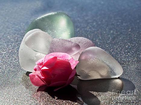 Barbara McMahon - Sea Rose