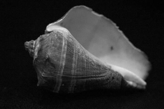 Amazing Jules - Sea Shell