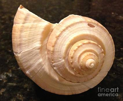 Sea shell by Arelys Jimenez