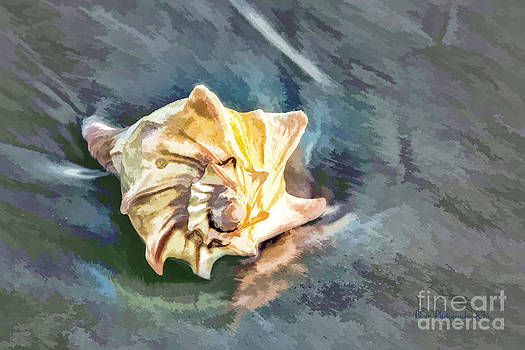 Sea Shell by the Sea Shore by Linda Blair