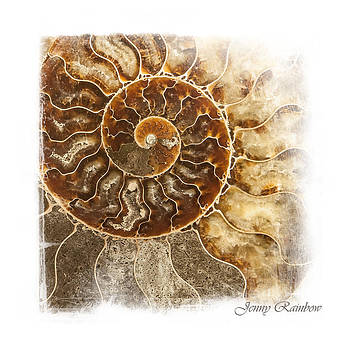 Jenny Rainbow - Sea Shell Nautilus. Elegant KnickKnacks from Jenny Rainbow