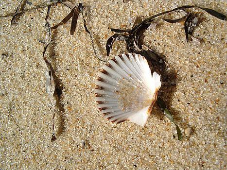Sea Shell by Paul Thomas