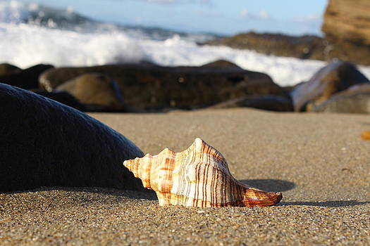 Sea Shell Shores by Murad Abel