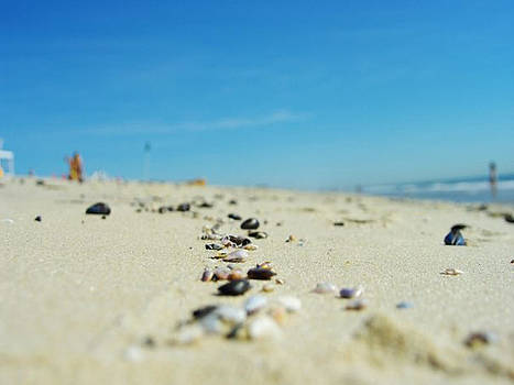 Sea Shells by the Sea.. by Sandra Kelly