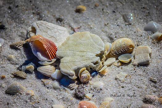 Deborah Hughes - Sea Shells