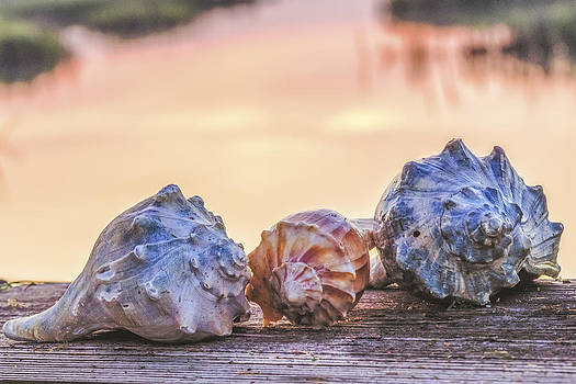 Sea Shells Image Art by Jo Ann Tomaselli
