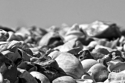 Sea Shells by John Basford