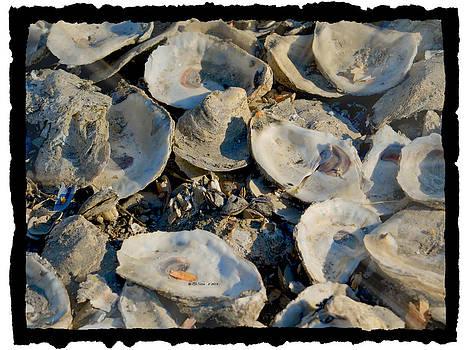 Sea Shells by Sheila Noren