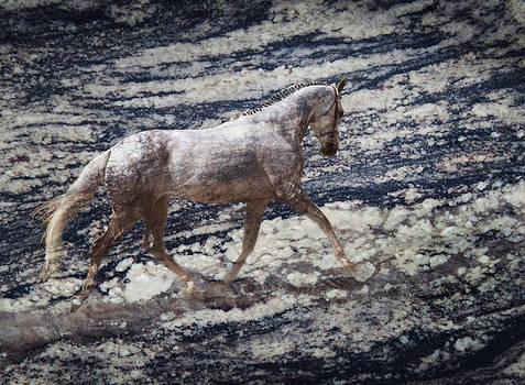 Sea Stallion by Melinda Hughes-Berland
