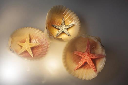 Sea Star In Shells by Martin Joyful