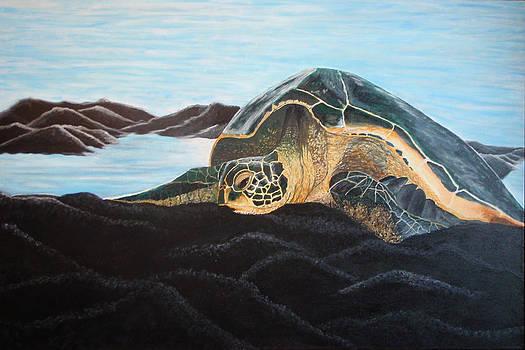 Sea Turtle by Brandy Gerber