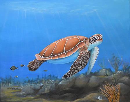 Sea Turtle II by Anthony Fotia