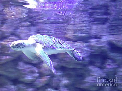Sea Turtle  by Michaelle Beasley
