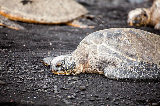 Sea Turtle on Black Sand by Ed Cilley
