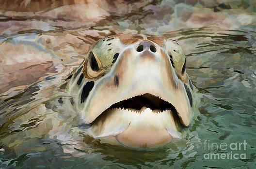 Dan Friend - Sea Turtle poking head out of water